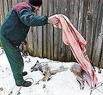 Par suņa nogalināšanu prasa reālu brīvības atņemšanu
