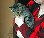 """""""Supermačo"""" kļūst par rāmu mājas kaķi"""