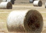 Ilggadīgo zālāju lauks dod rekordražu