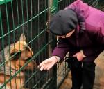 Liepājnieki dzīvnieku patversmei saziedo vairāk nekā 100 kilogramus barības