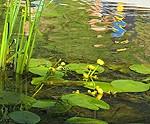 Ūdens upēs ir līdz +23, jūras piekrastē – līdz +21 grādam silts