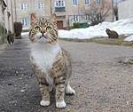 Prezentēs jaunas iespējas dzīvnieku aizsardzības jomā