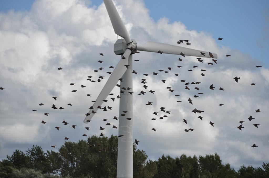 Par vēja parka būvatļauju sūdzas tiesā