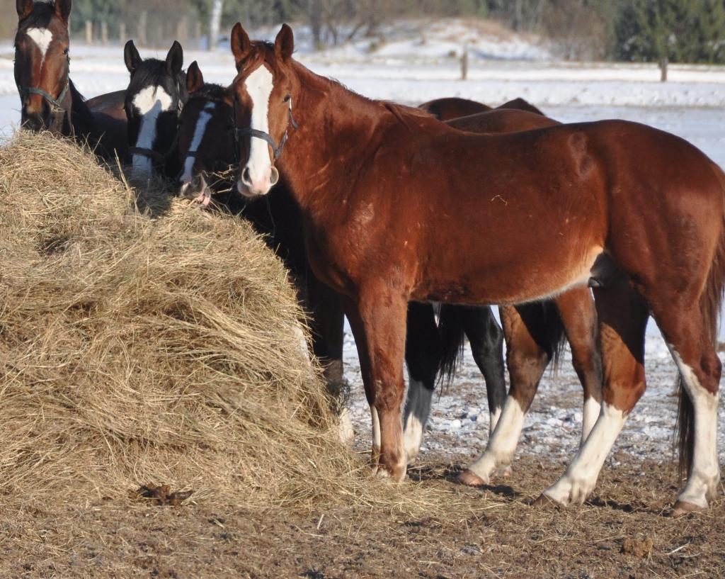 Rīko treniņu ar zirgiem