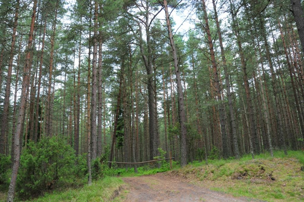 Mežu īpašnieki var pretendēt uz atbalstu