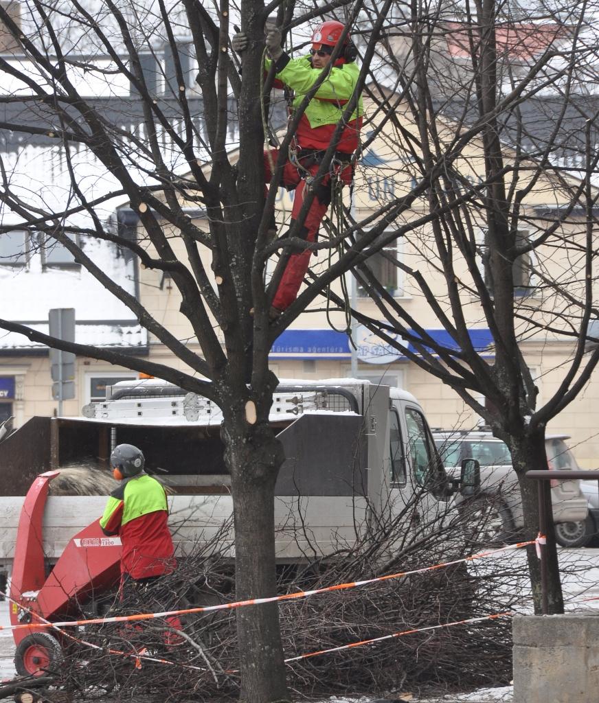 Nākamnedēļ turpināsies koku vainagu veidošana