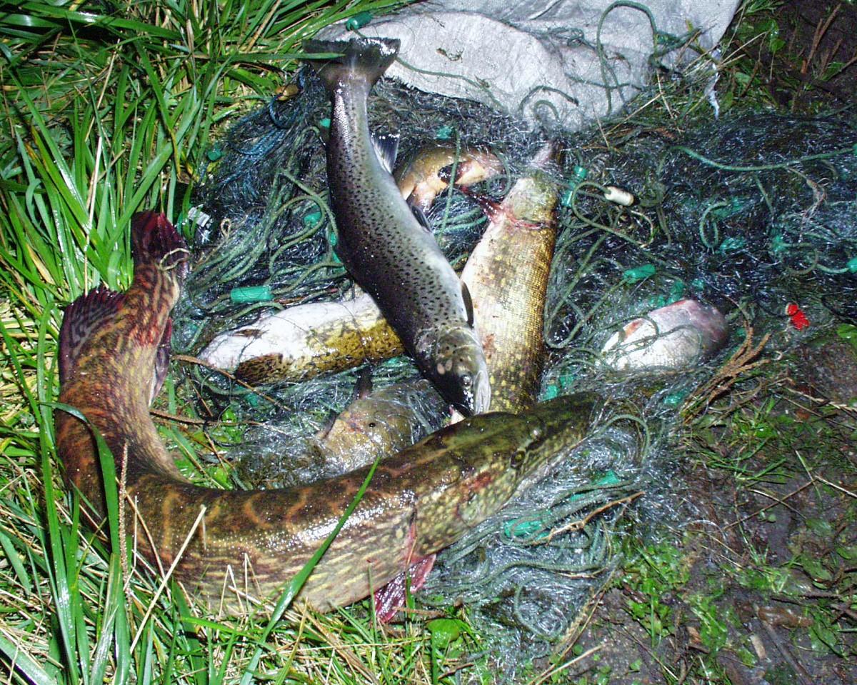 Maluzvejnieku dzīres sākušās