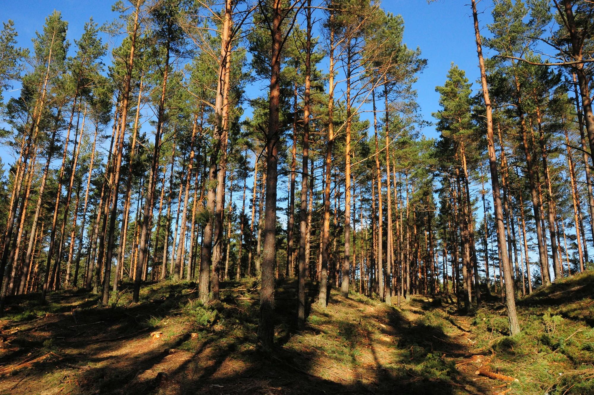 Skolēnus mudina iepazīt mežus