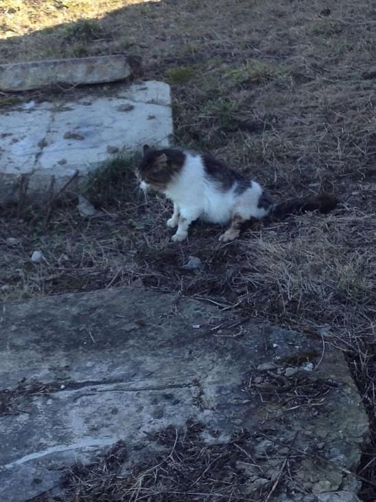 Papildināts – Dzīvnieku aizsargi: Kaķis Kapsēdē sadedzināts