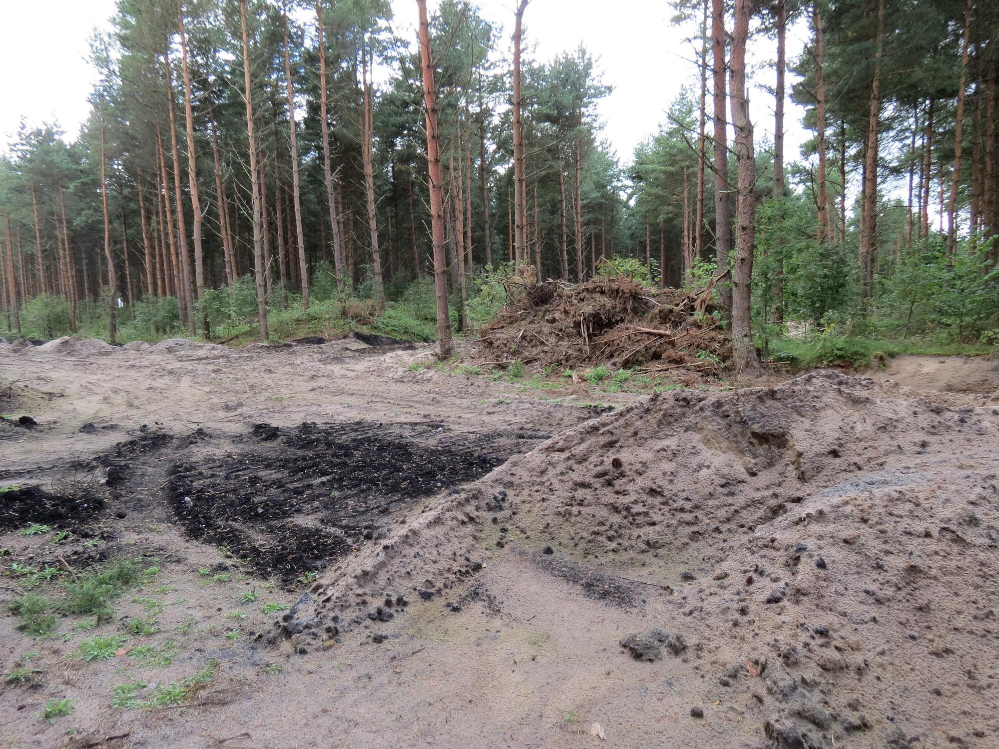Šķēdes kāpās izcirsts mežs vairāk nekā pushektāra platībā