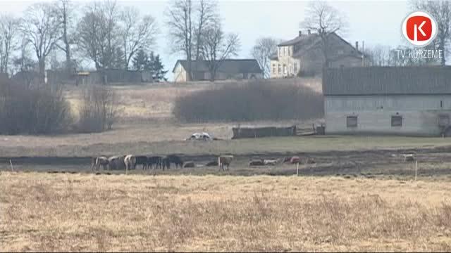 PVD Priekules novadā saimniekam konfiscē daļu ganāmpulka