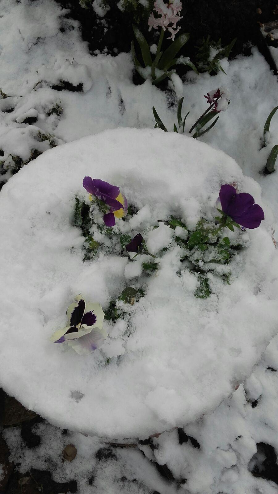 Arī Liepājā šorīt bija vērojama sniega sega