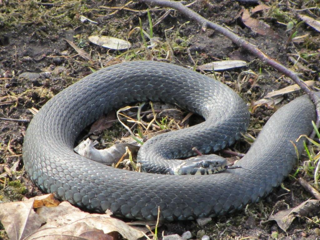 Priekulē no garāžas iznes čūsku