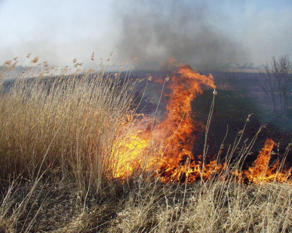 Liepāja uzstāda antirekordu – pirmais kūlas ugunsgrēks reģistrēts mūspusē