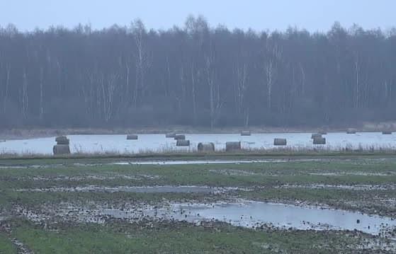 Zemnieki sāk pārsēt plūdos cietušos ziemājus