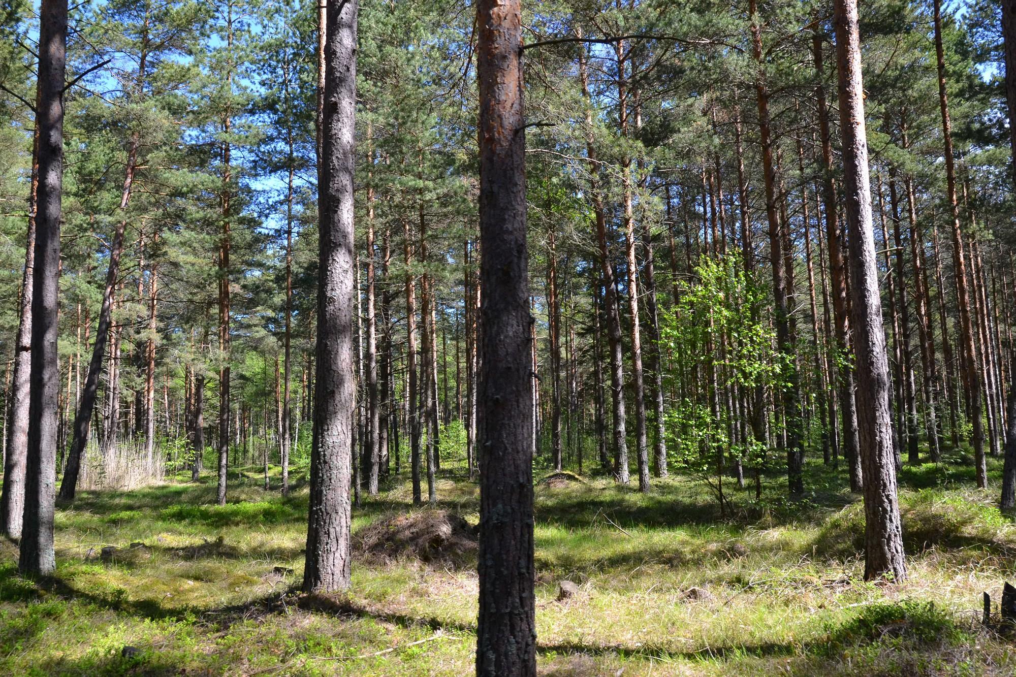 Gramzdas pagastā veidos meža kinozāli