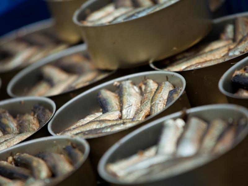 Plāno būvēt zivju pārstrādes ražotni