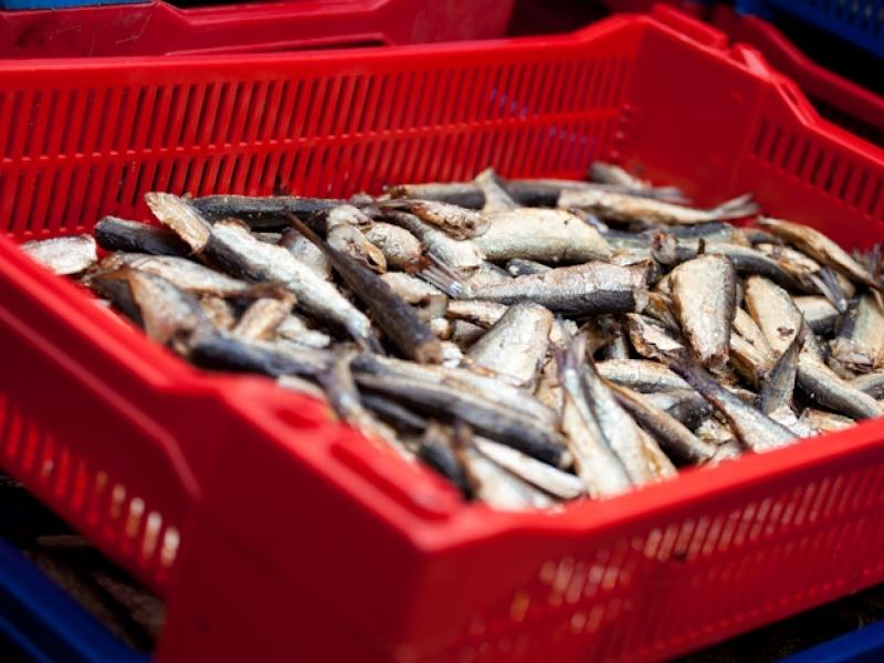 """Tiesā iesniegts pieteikums atzīt zivju pārstrādes uzņēmumu """"Piejūra"""" par maksātnespējīgu"""