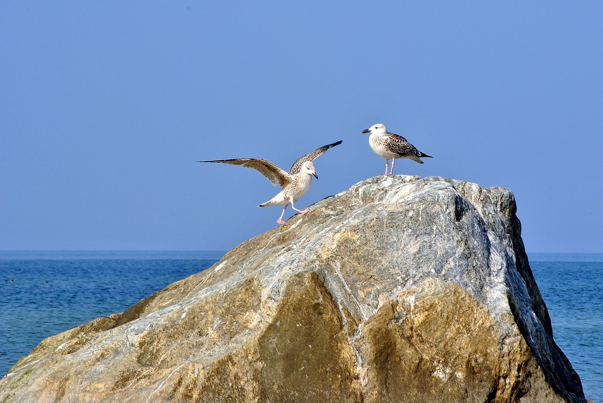 Pāvilostas novadā izstrādāti putnu un tauriņu vērošanas maršruti