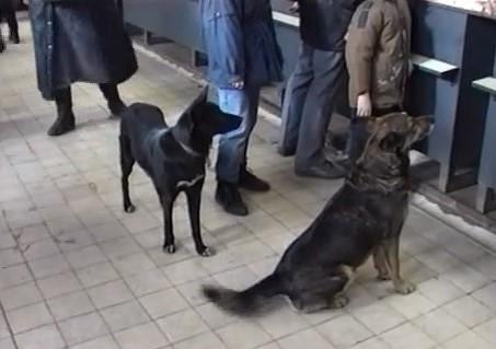 Tā tolaik dzīvojām: Pilsētā liels klaiņojošo suņu skaits