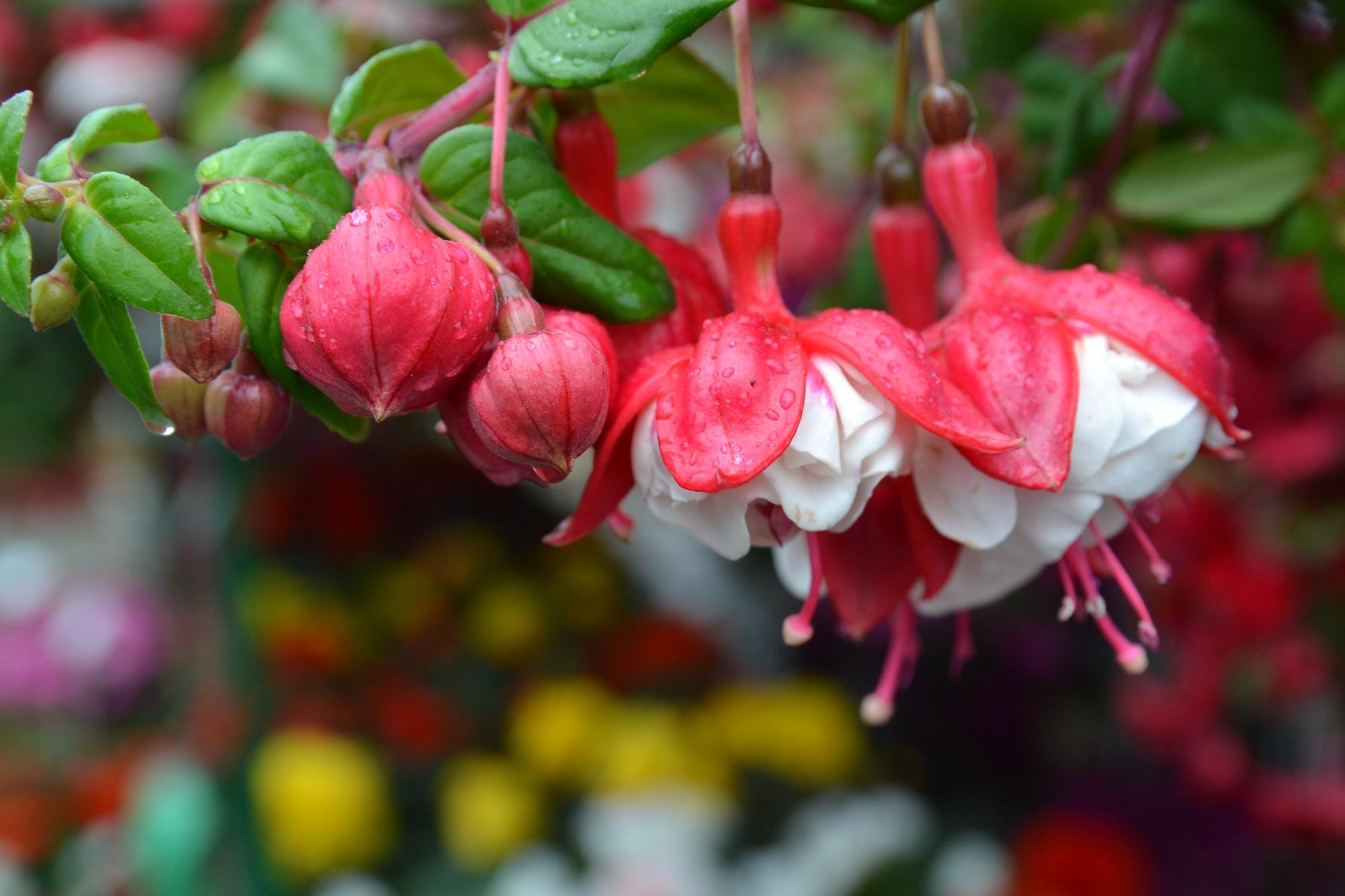 Ziedi un skumju smarža