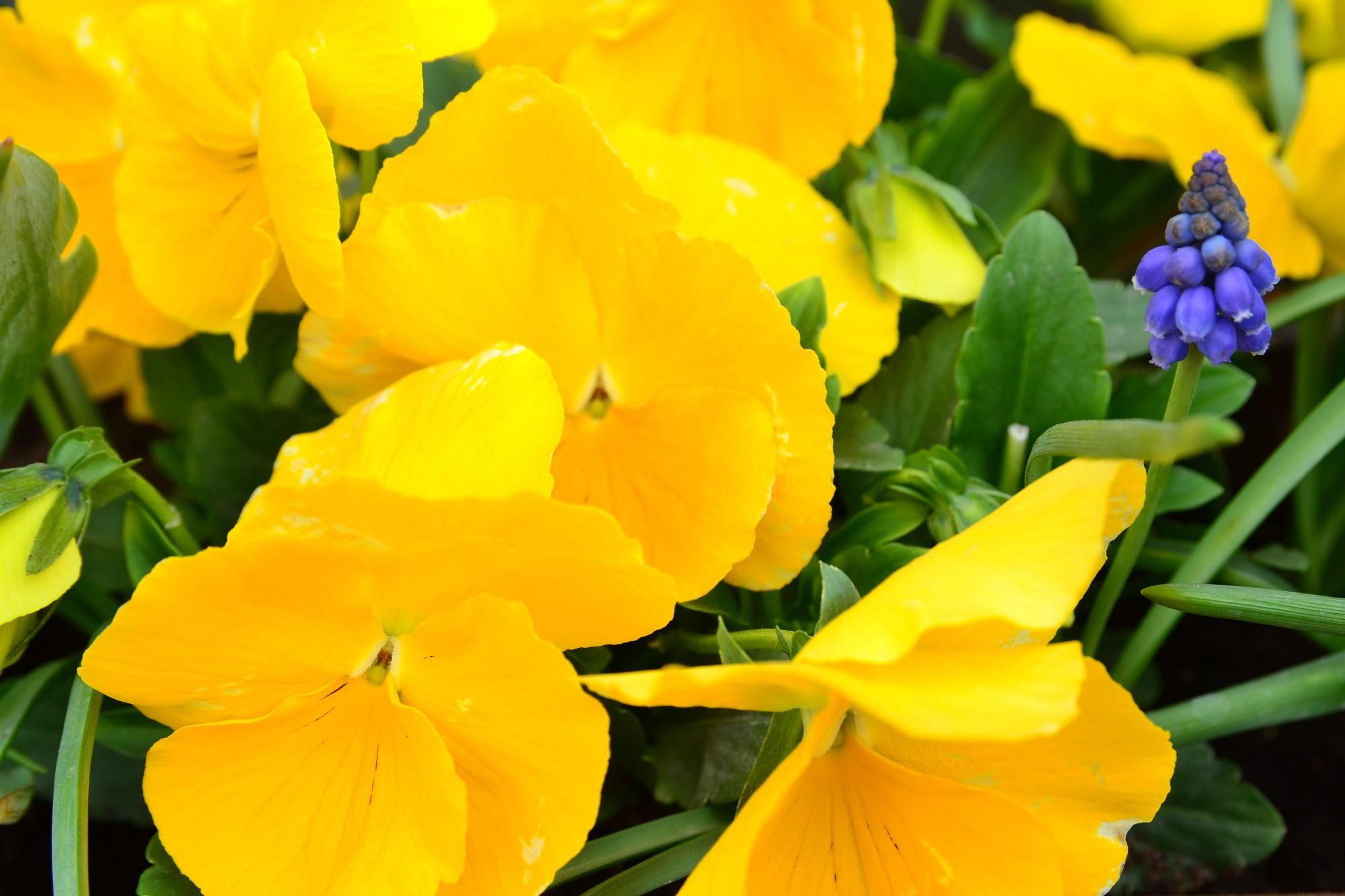 Iespējams, tirgo zagtus ziedus