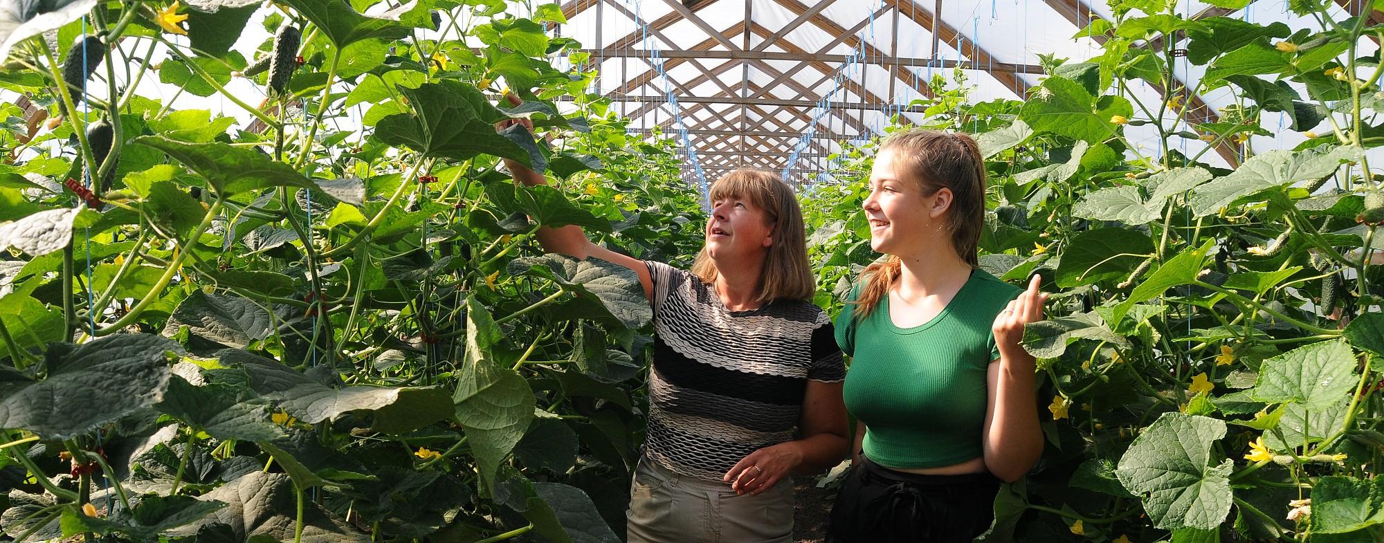 Starp gurķu tūkstošiem un tomātu simtiem. Durbē dārzeņus audzē ar mīlestību