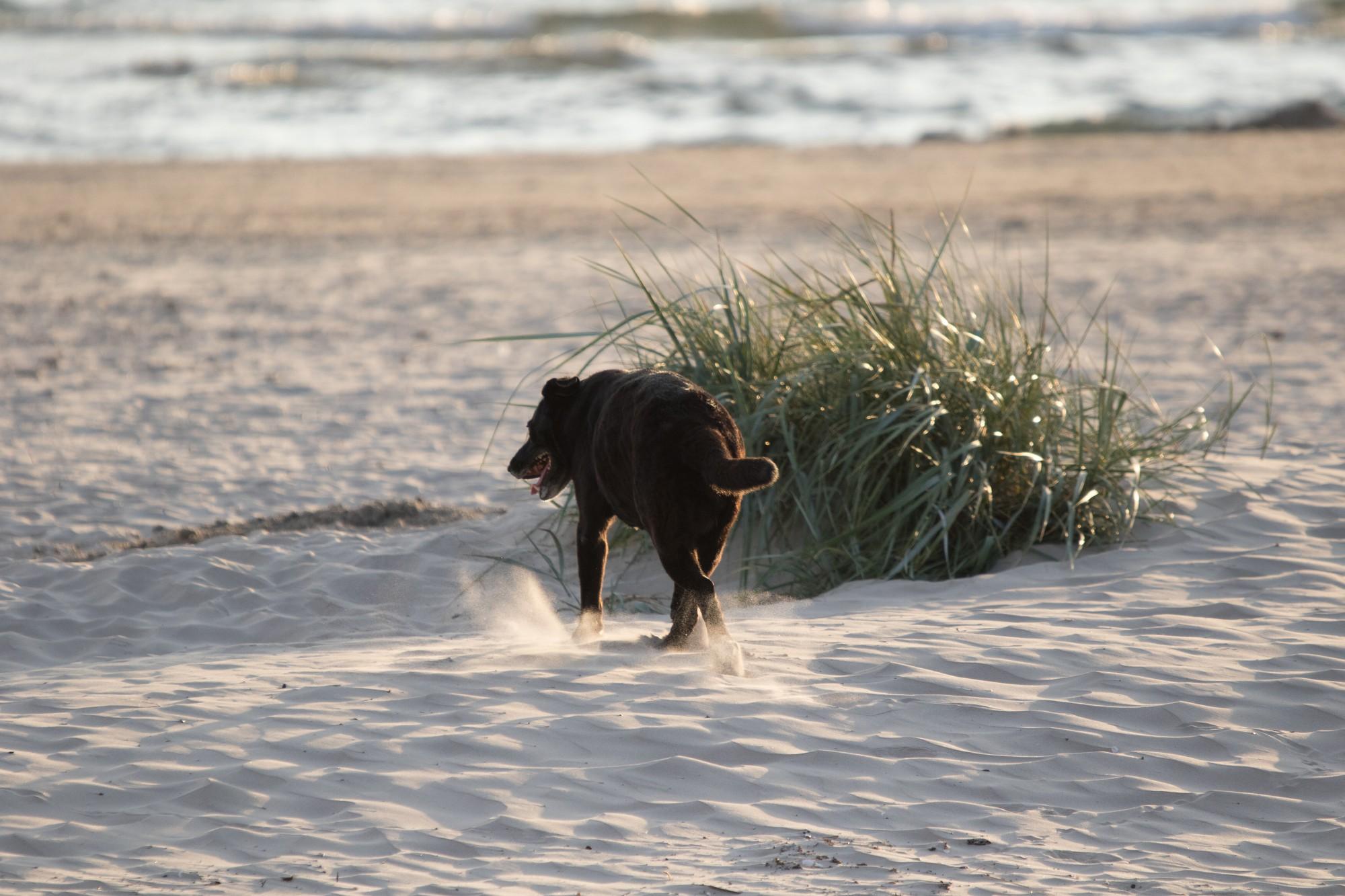 Klaiņojošs suns aizved pie meklēšanā esoša vīrieša
