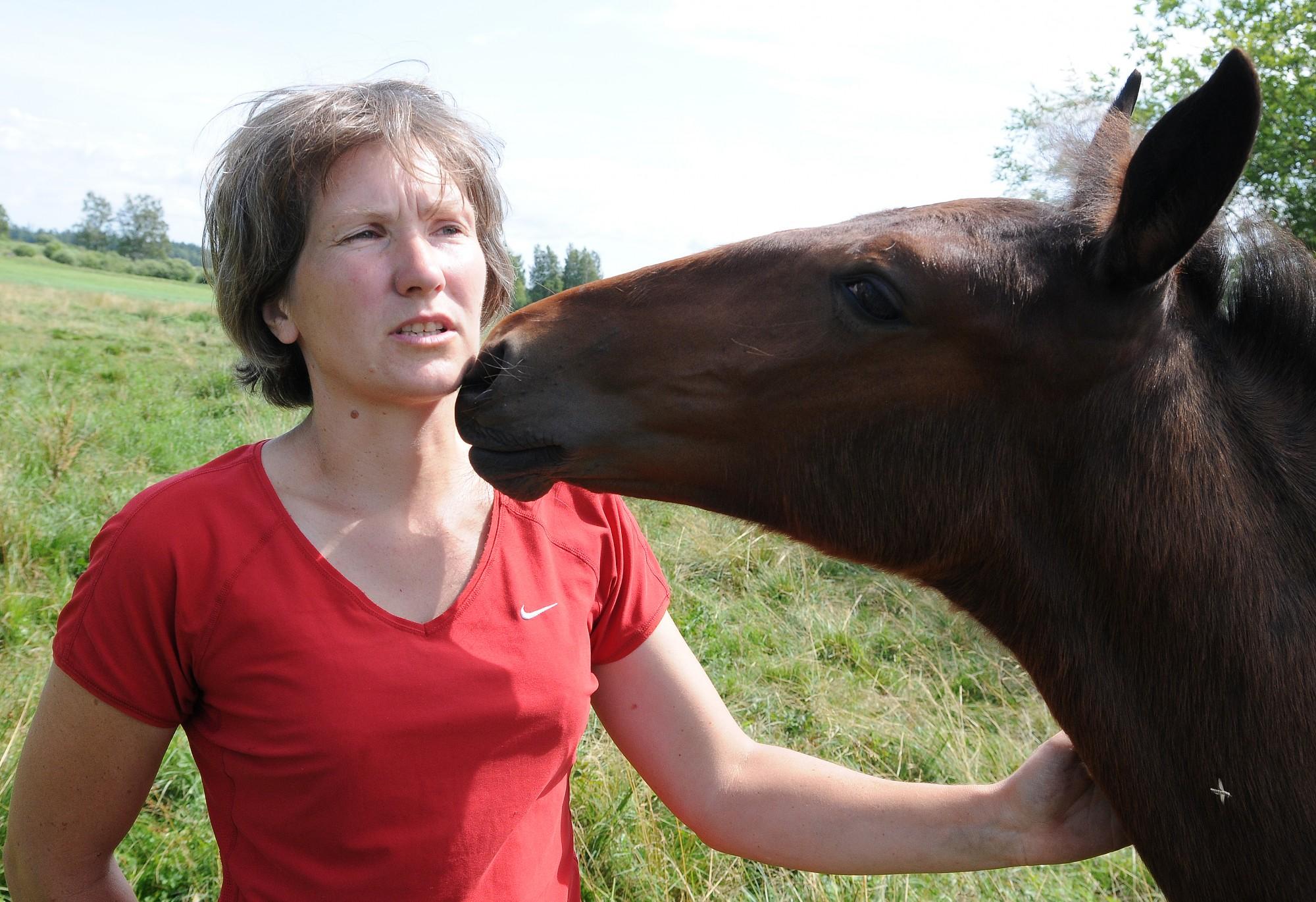Saldais ēdiens – Latvijas zirgi