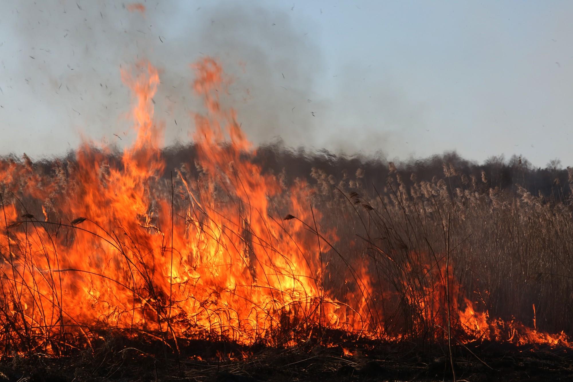 Vērgales pagastā lielā platībā degusi neapsaimniekota saimniecība un sausā zāle