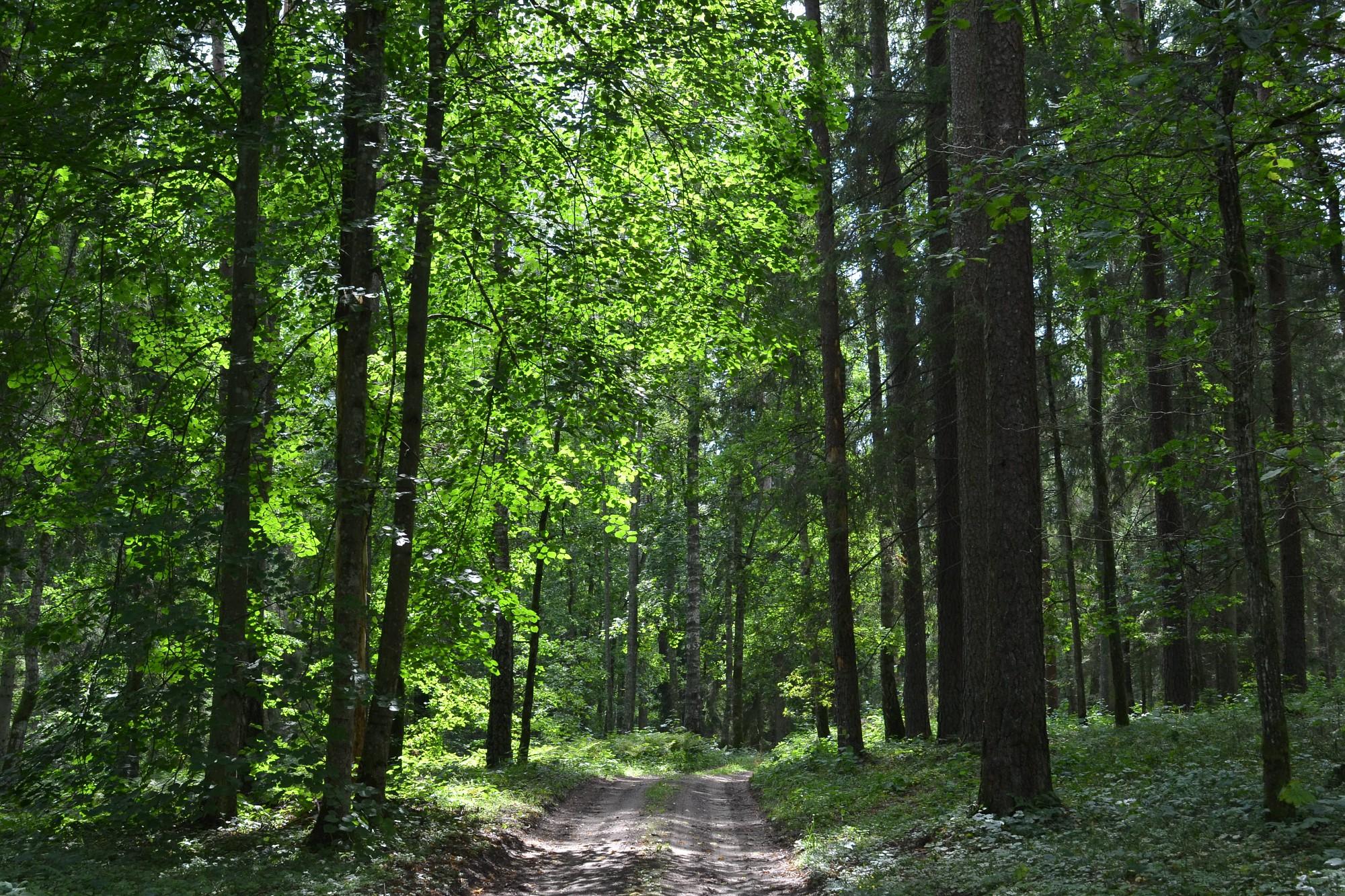 Liepājā degusi meža zemsedze un sausā zāle