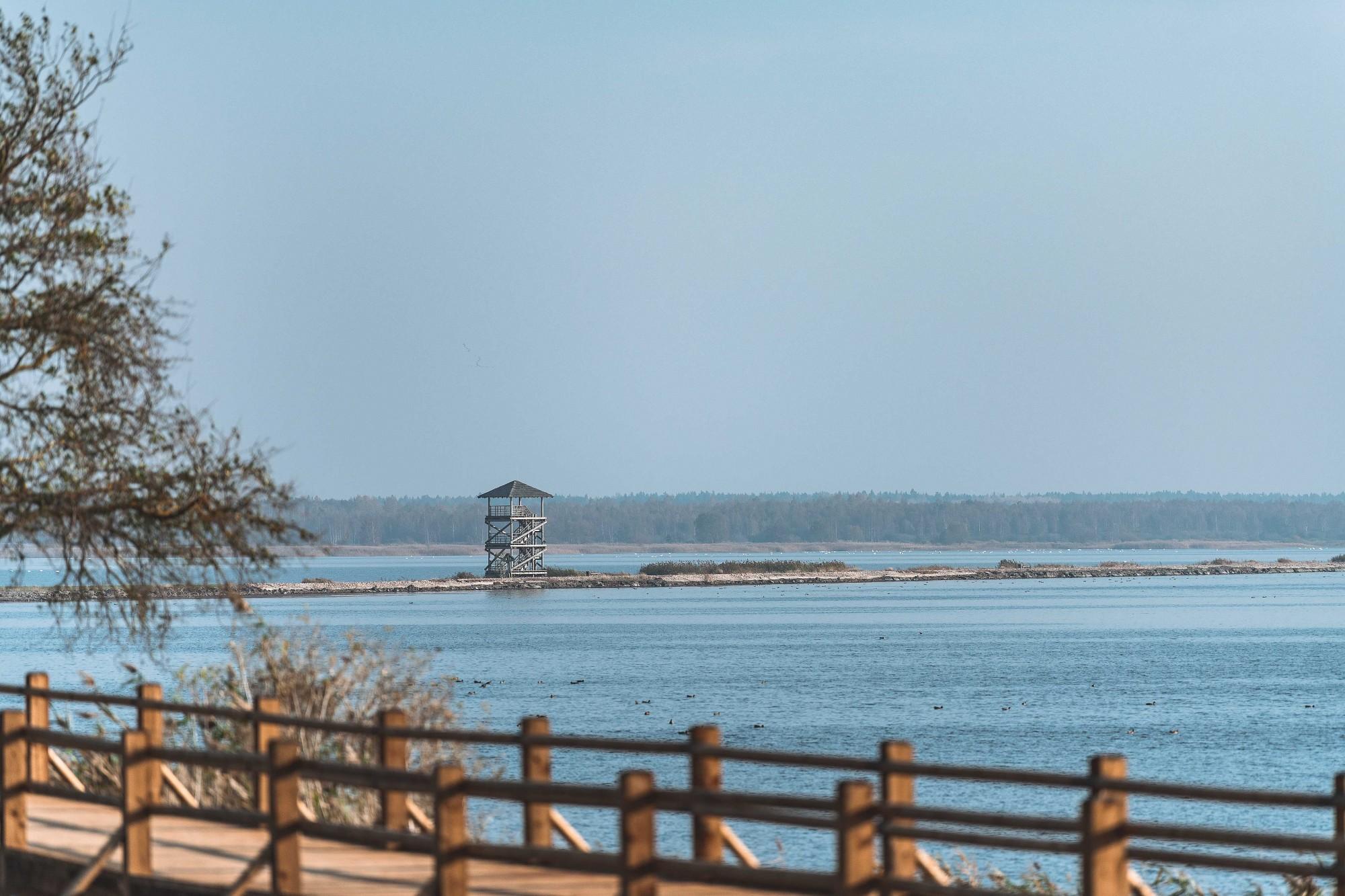 Ap Liepājas ezeru dabas daudzveidību nodrošina gan pļāvēji, gan zālēdāji