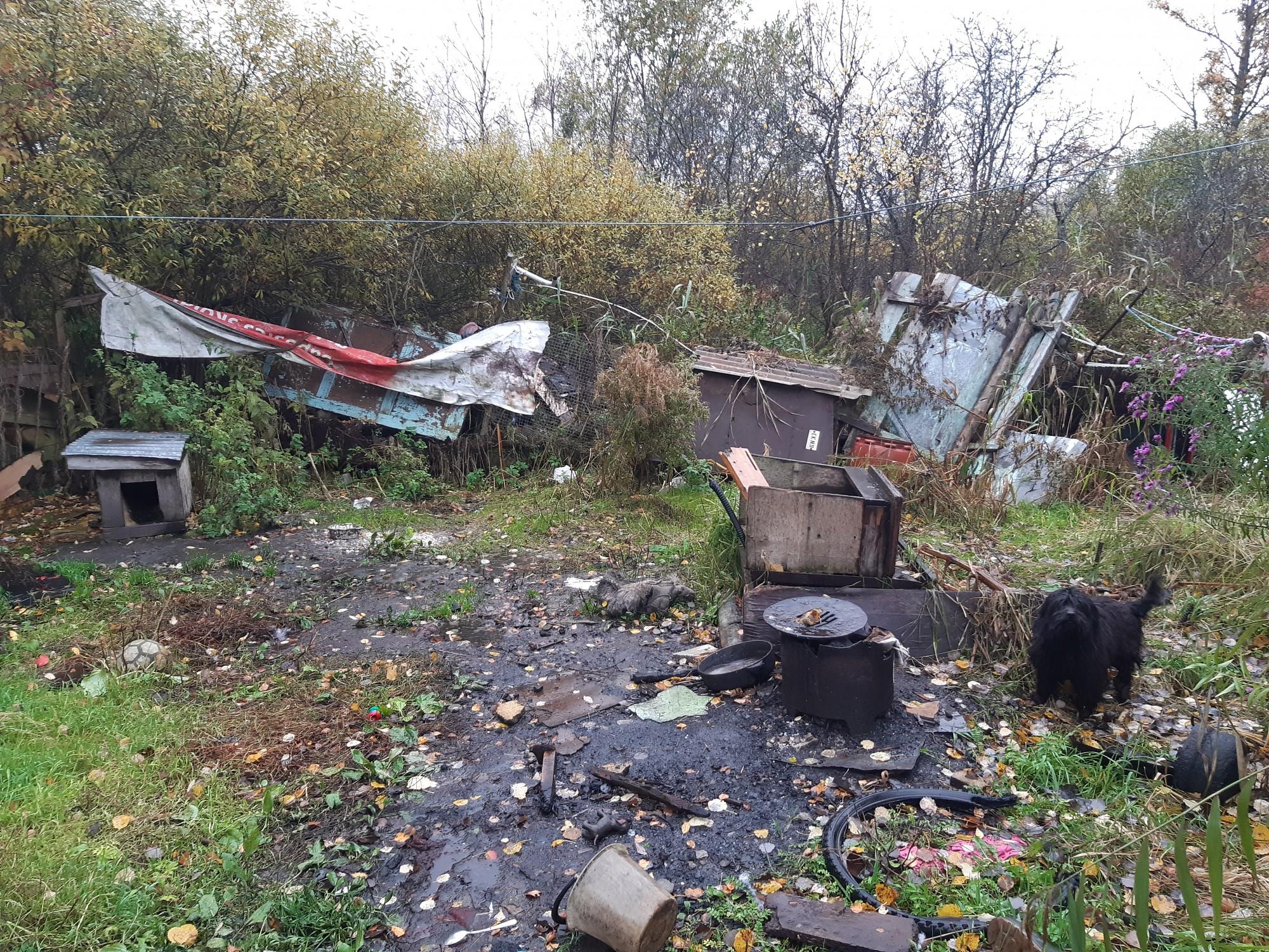 Belka un Strelka no Zaļās birzes mazdārziņiem nonāk patversmē