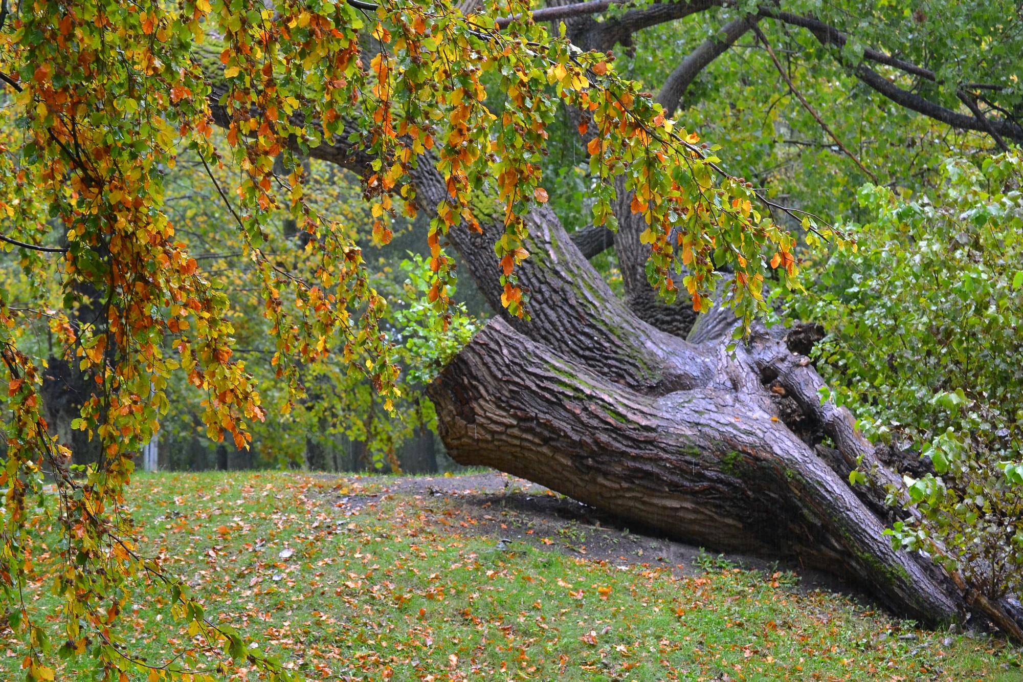 Baudot zelta rudeni, dabā jāizturas ar izpratni un cieņu