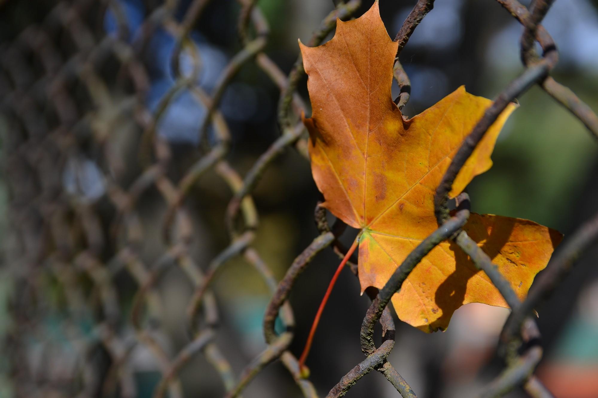 Nīcas pagastā deguši sliežu gulšņi, koku lapas un atkritumi