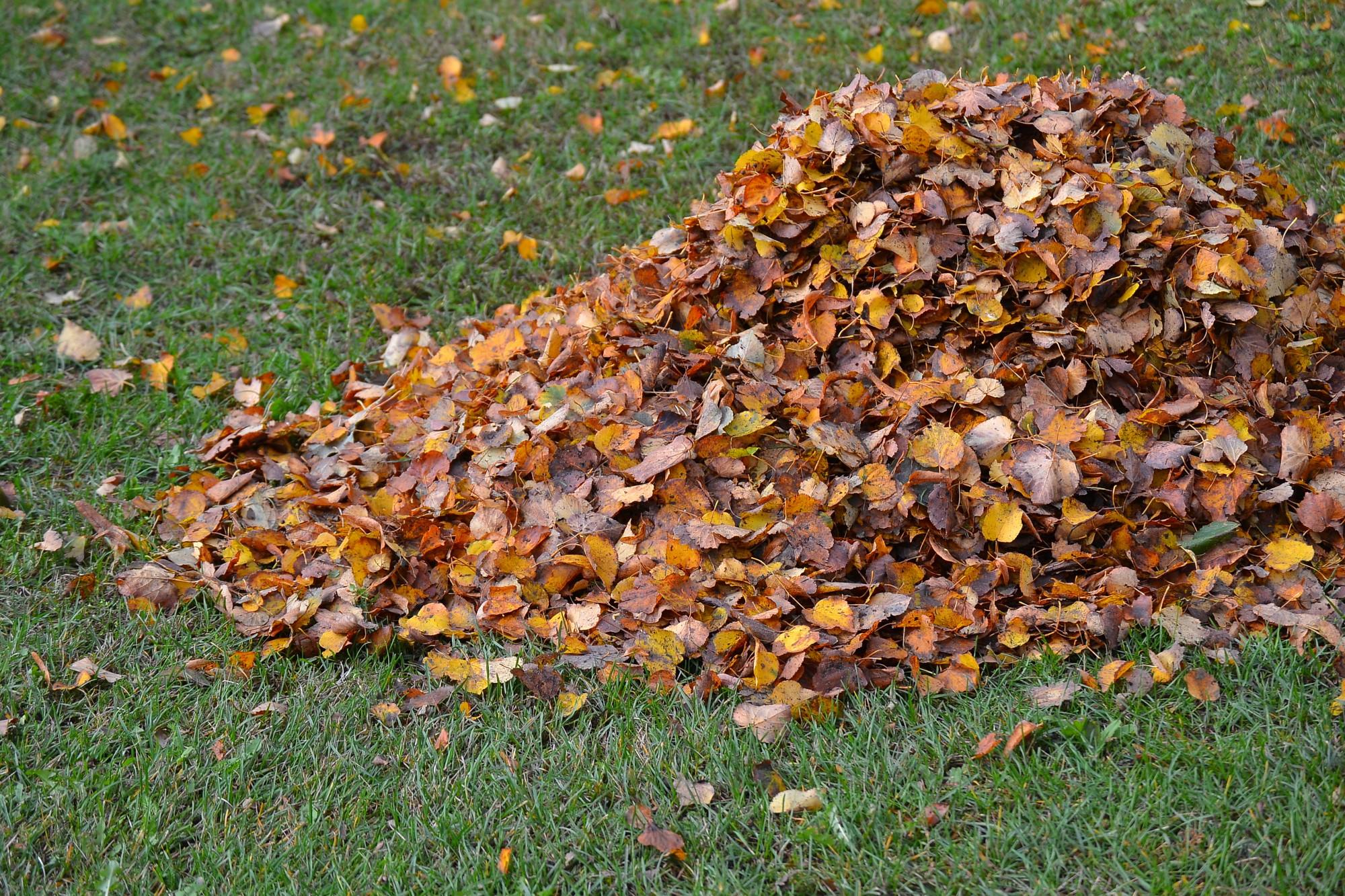 Zaļos atkritumus var nodot bez maksas