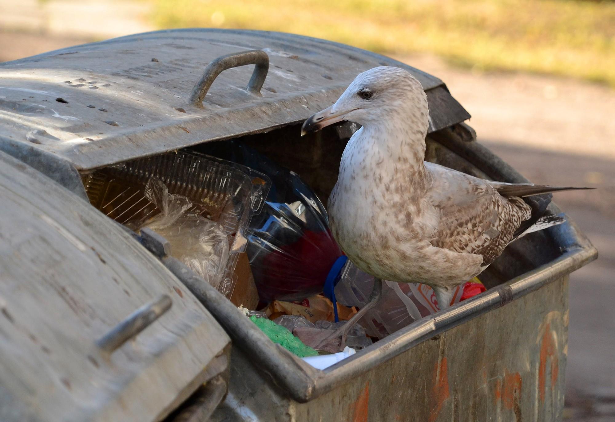 Apdzēsa atkritumu konteineru