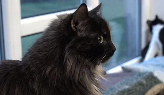 """Dzīvnieku patversme """"Lauvas sirds"""" pirmssvētku laikā aptur kaķu un suņu adopciju"""