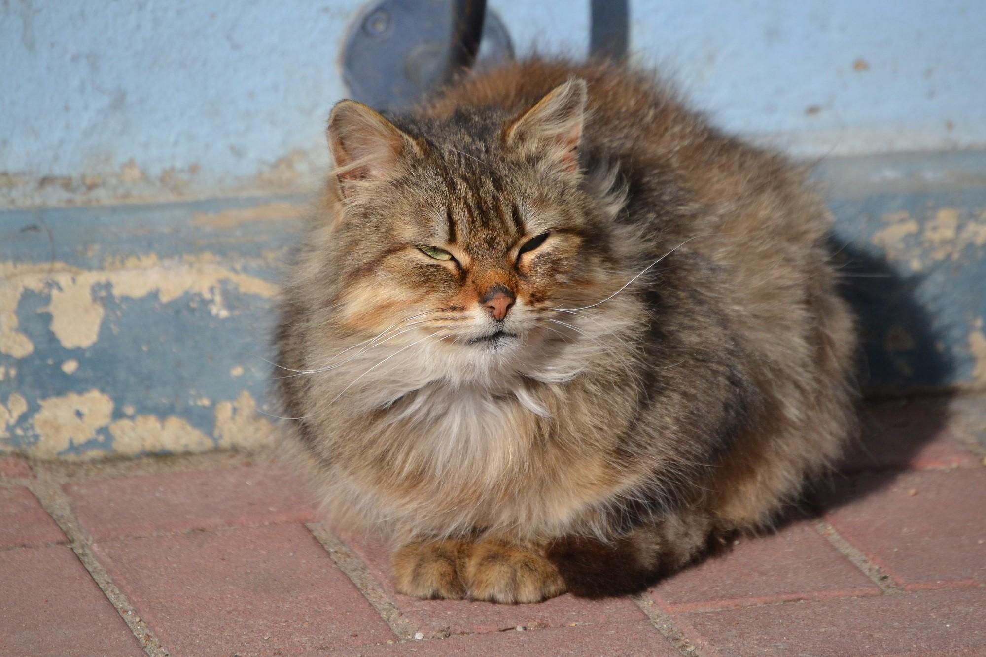 No nojumes nocēla kaķi