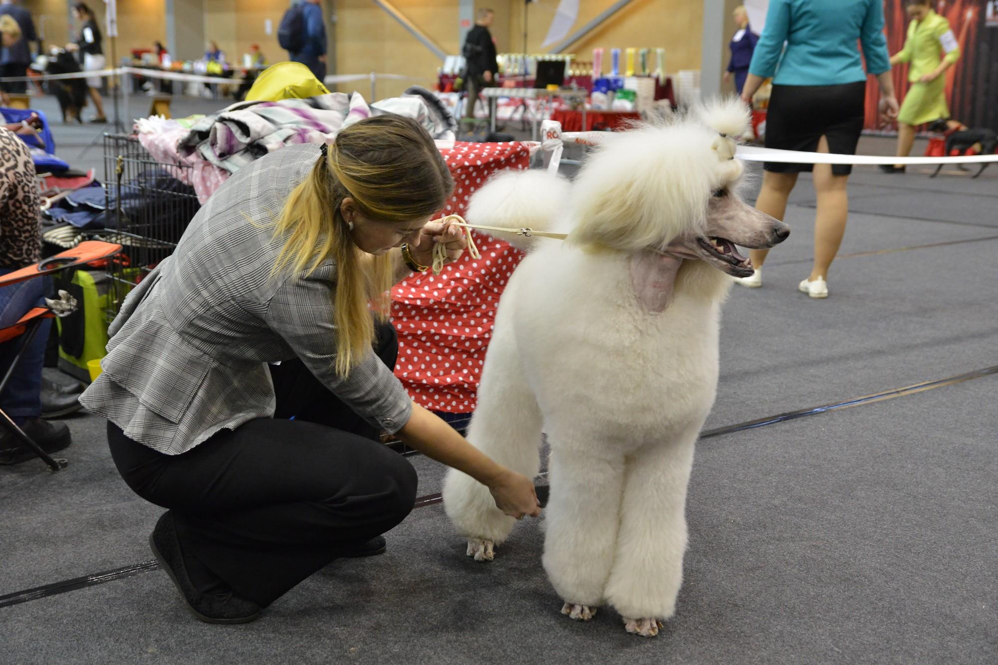 Suņu izstādē pulcējas populāras un retas mīluļu šķirnes
