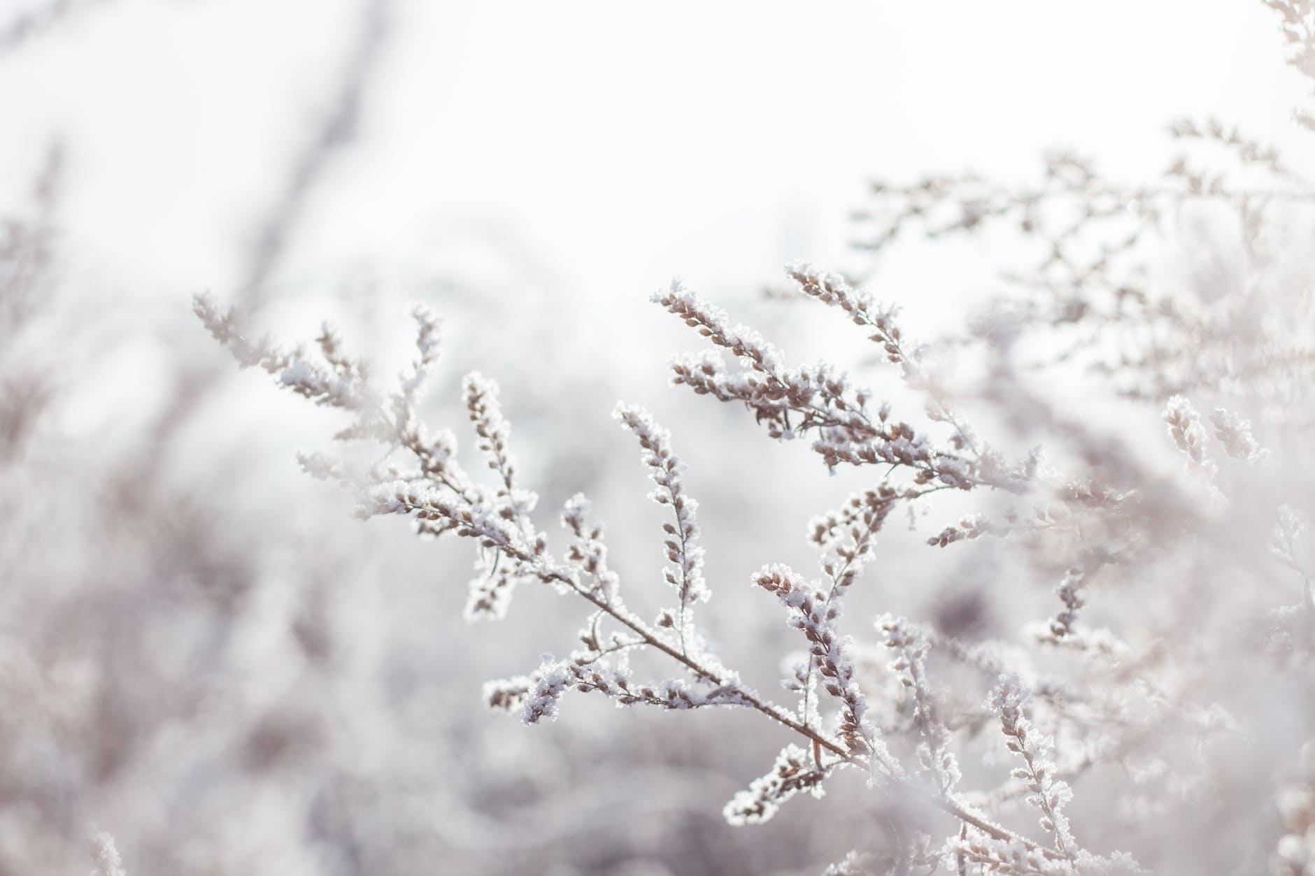 Janvāris Latvijā, iespējams, kļūs par siltāko novērojumu vēsturē