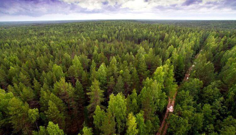 Nīcā pārdod mežu, lai pabeigtu projektus