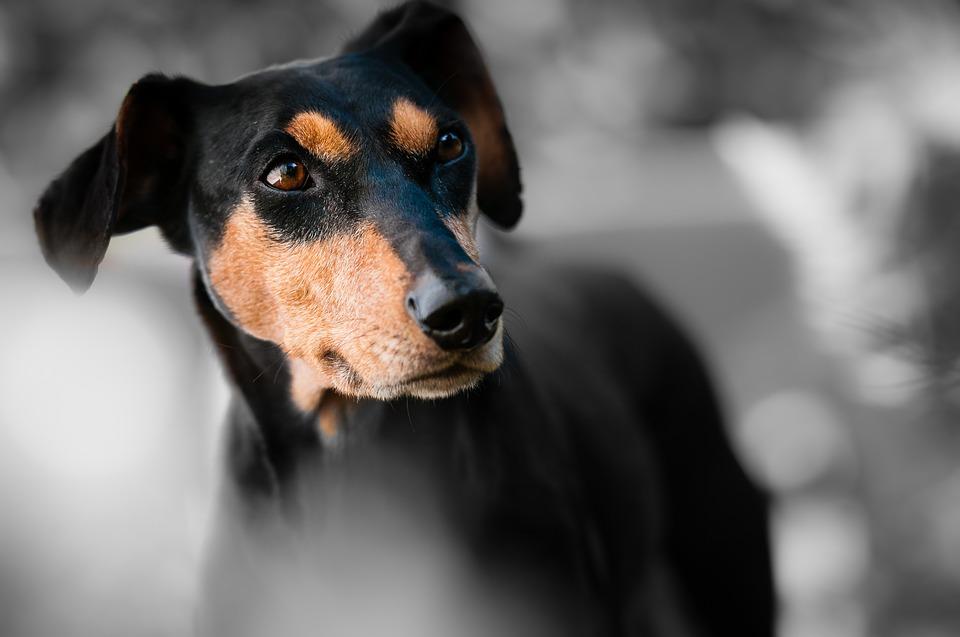 Pēc uguņošanas patversmē suņu pieplūduma nav