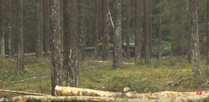 Plānotās izmaiņas mežu ciršanā – sabiedrības vai uzņēmēju interesēs?