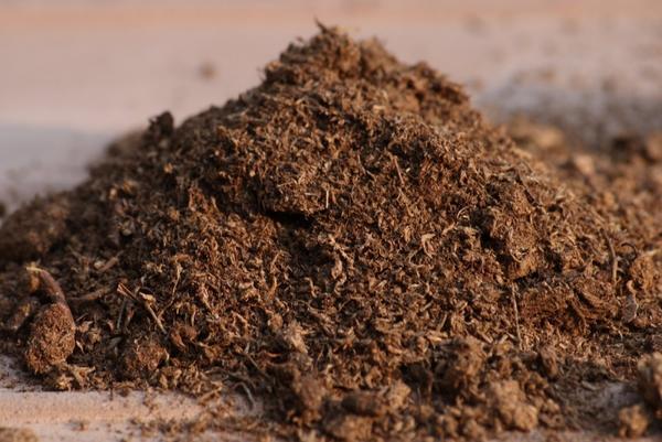 Latvijas kūdra tiekot nepamatoti pielīdzināta fosilajam kurināmajam