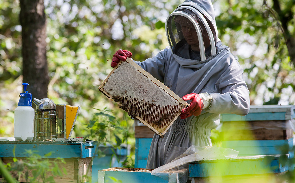 Biškopji Liepājā runās par savādo ziemu