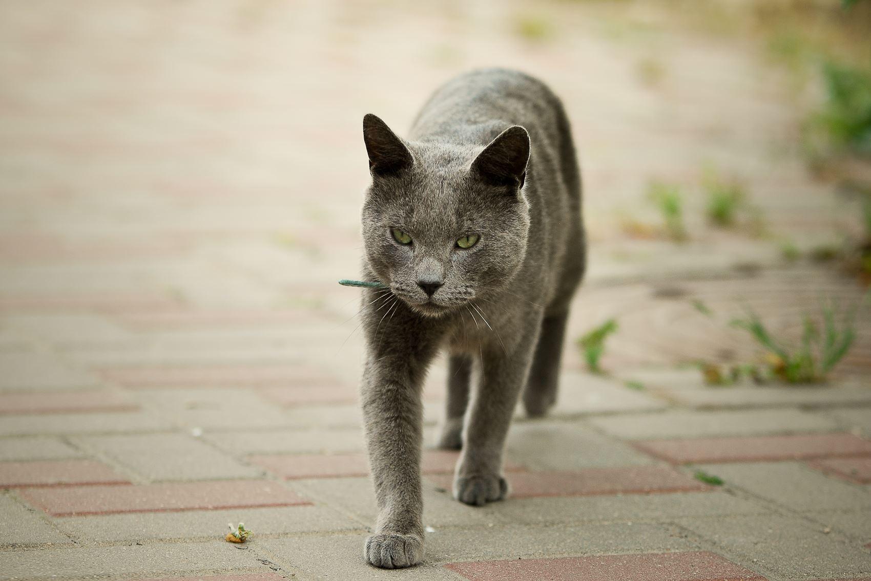 Sabiedrību aicina aktīvāk iesaistīties ielas kaķu sterilizācijas programmā