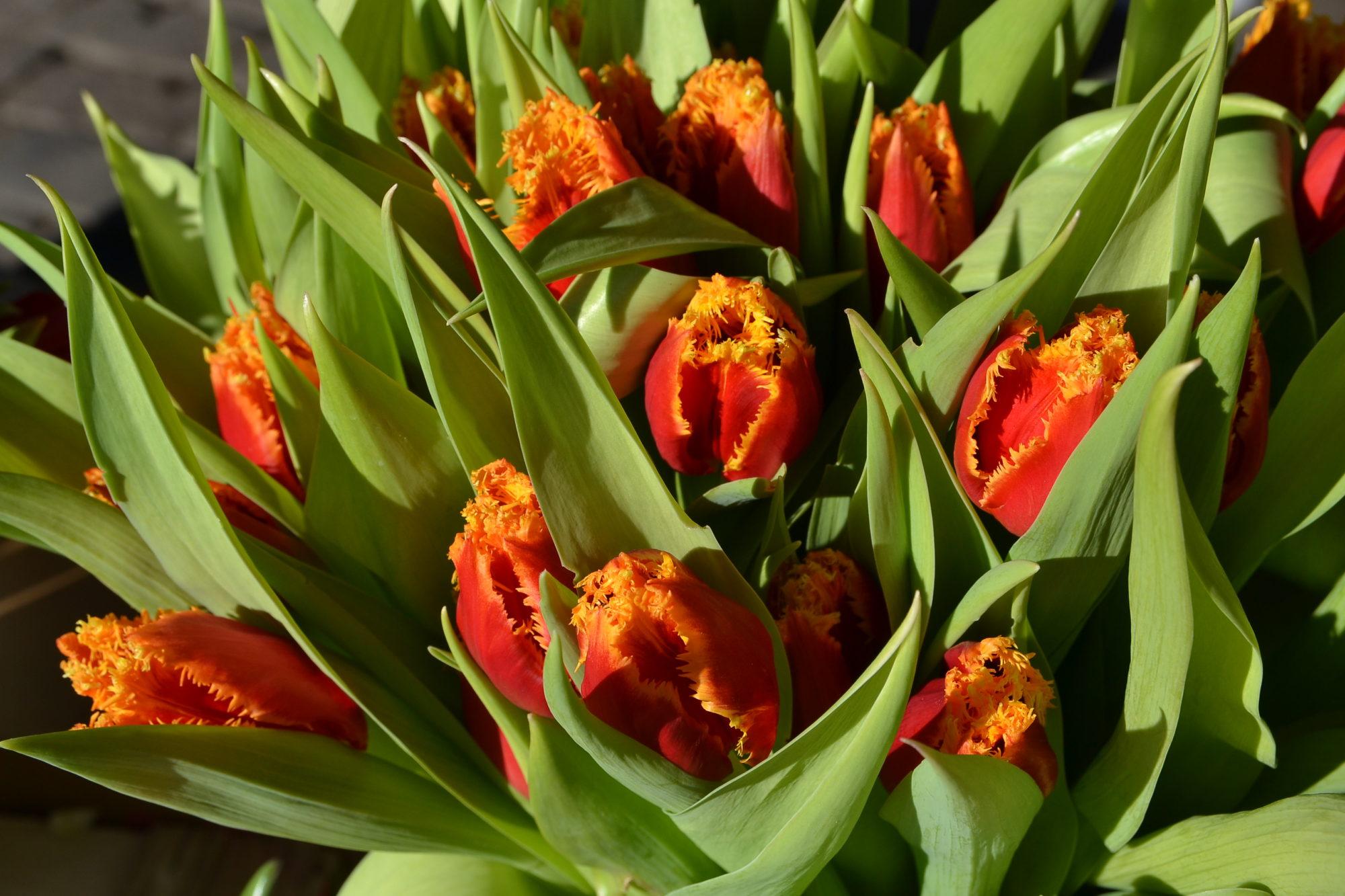 8. martā – silta saule un skaisti ziedi