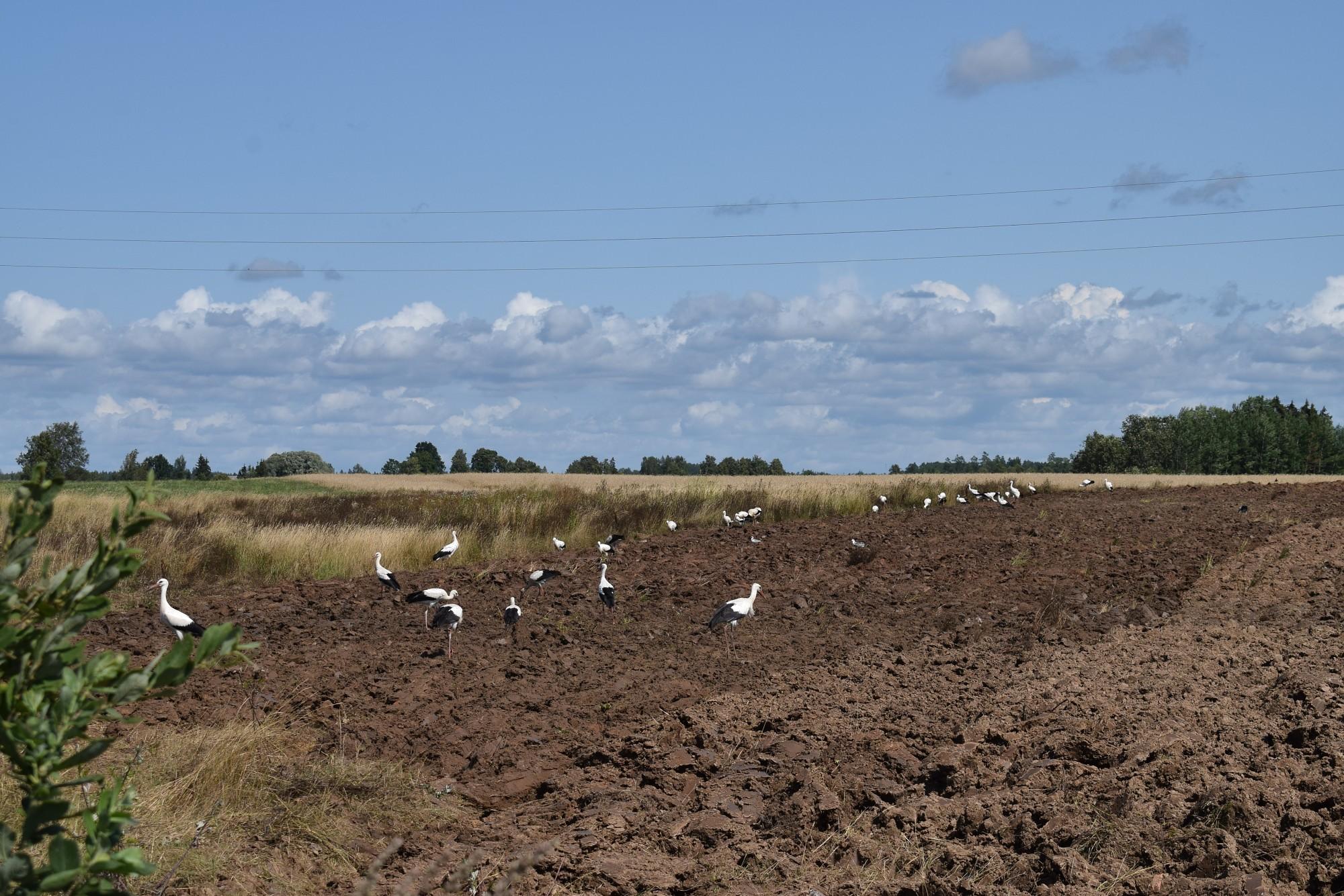 Atbalsta pasākumiem lauksaimniecībā novirzīs 45,5 miljonus eiro