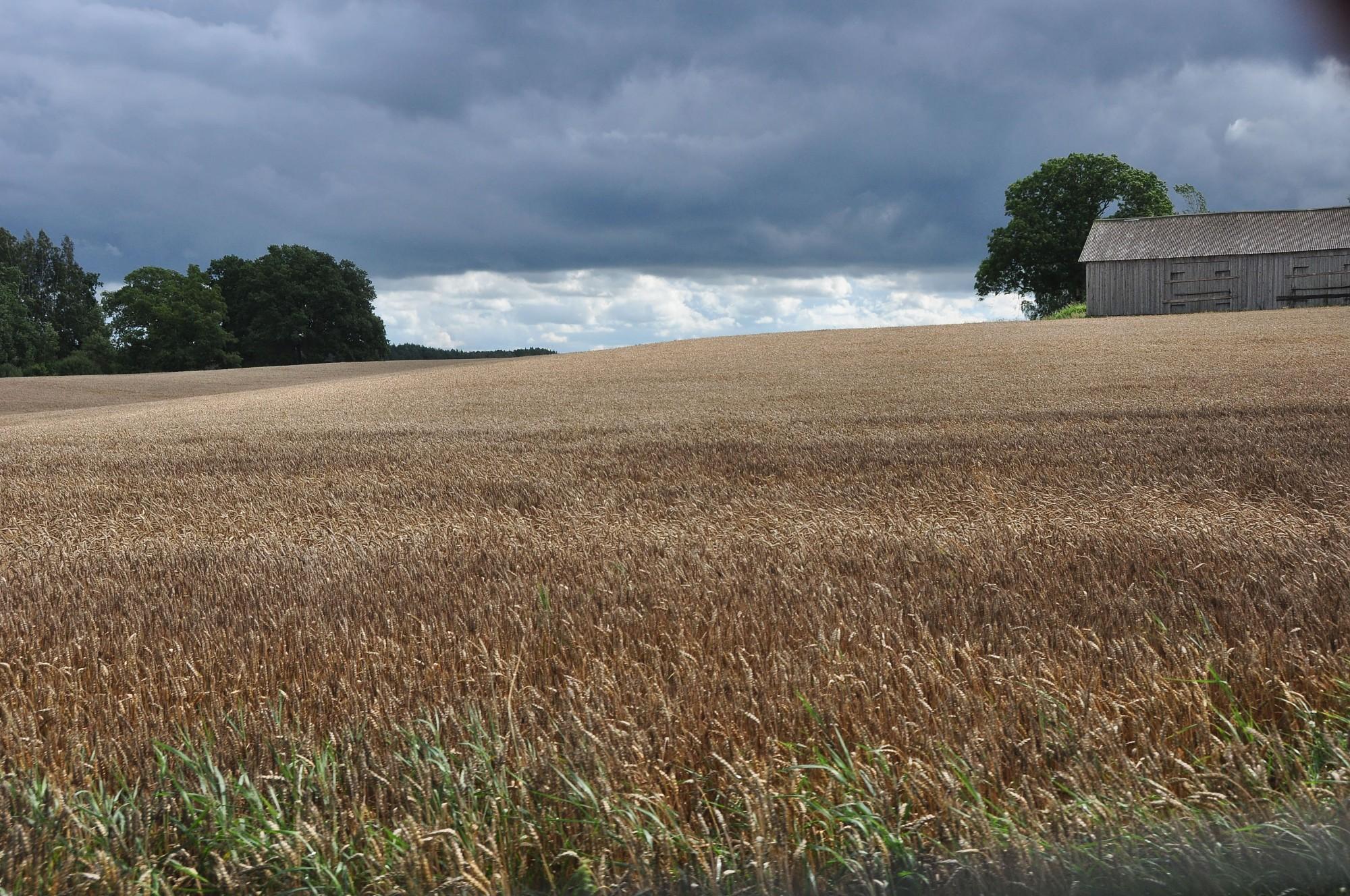 Covid 19 izraisīto krīzi izjūt arī lauksaimnieki